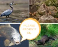 Pond Predator Control- Part 1 of 3